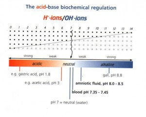 alkaline-living-acid-base-chart